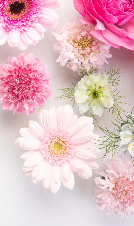 flower201261770